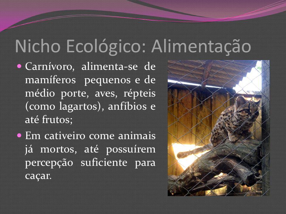 Nicho Ecológico: Alimentação Carnívoro, alimenta-se de mamíferos pequenos e de médio porte, aves, répteis (como lagartos), anfíbios e até frutos; Em cativeiro come animais já mortos, até possuírem percepção suficiente para caçar.