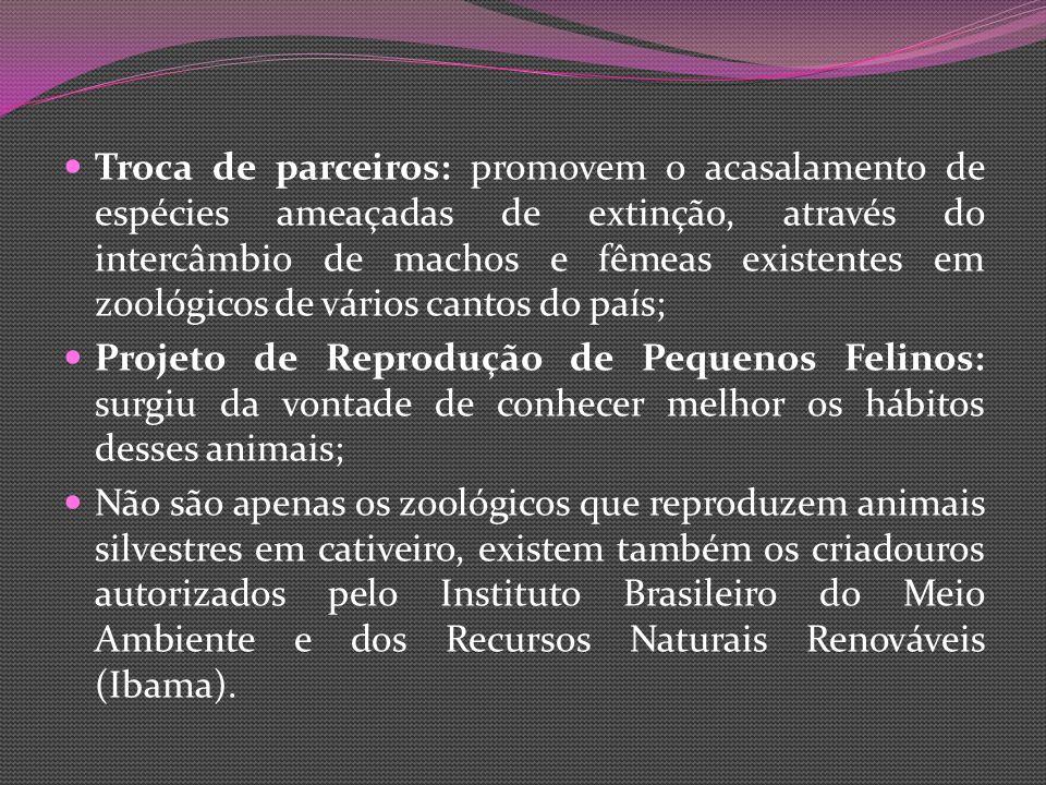 Troca de parceiros: promovem o acasalamento de espécies ameaçadas de extinção, através do intercâmbio de machos e fêmeas existentes em zoológicos de vários cantos do país; Projeto de Reprodução de Pequenos Felinos: surgiu da vontade de conhecer melhor os hábitos desses animais; Não são apenas os zoológicos que reproduzem animais silvestres em cativeiro, existem também os criadouros autorizados pelo Instituto Brasileiro do Meio Ambiente e dos Recursos Naturais Renováveis (Ibama).