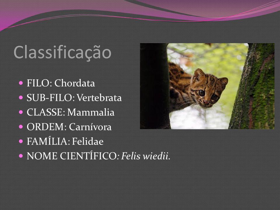 Classificação FILO: Chordata SUB-FILO: Vertebrata CLASSE: Mammalia ORDEM: Carnívora FAMÍLIA: Felidae NOME CIENTÍFICO: Felis wiedii.