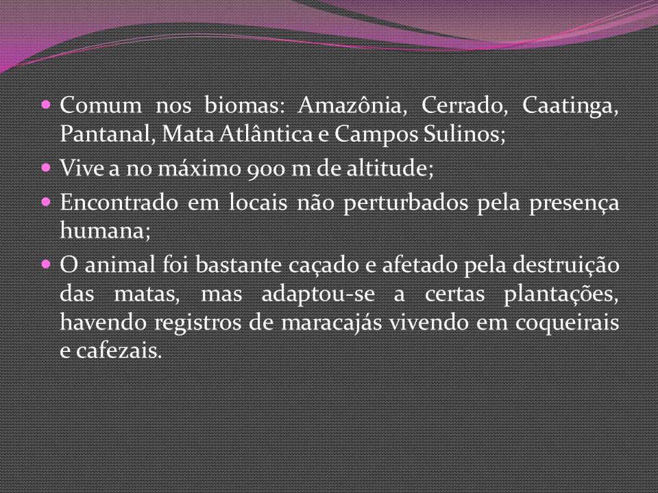 Comum nos biomas: Amazônia, Cerrado, Caatinga, Pantanal, Mata Atlântica e Campos Sulinos; Vive a no máximo 900 m de altitude; Encontrado em locais não perturbados pela presença humana; O animal foi bastante caçado e afetado pela destruição das matas, mas adaptou-se a certas plantações, havendo registros de maracajás vivendo em coqueirais e cafezais.