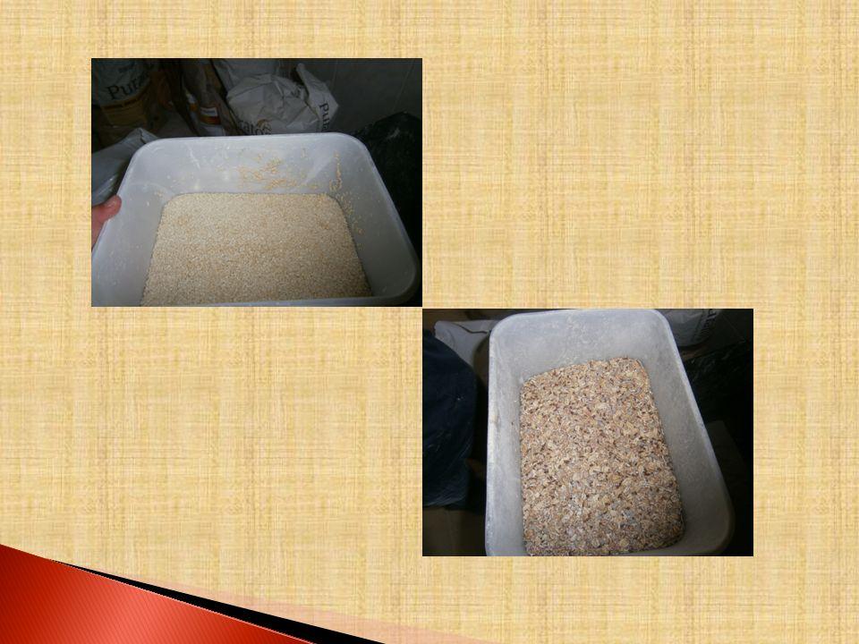 CEIFAR Passam alguns meses e o milho, o centeio e o trigo estão prontos para serem colhidos. Para se colher o trigo do solo é necessário ceifá-lo com