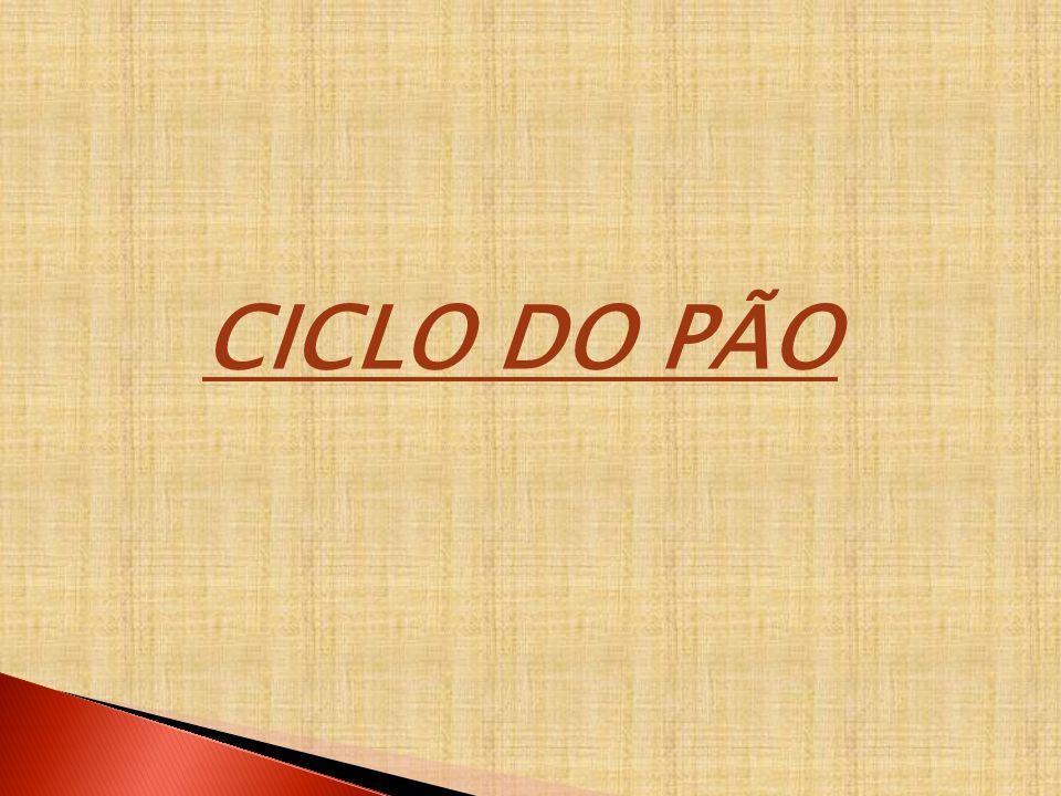 CICLO DO PÃO