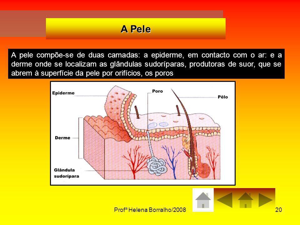 Profª Helena Borralho/200820 A Pele A pele compõe-se de duas camadas: a epiderme, em contacto com o ar: e a derme onde se localizam as glândulas sudor