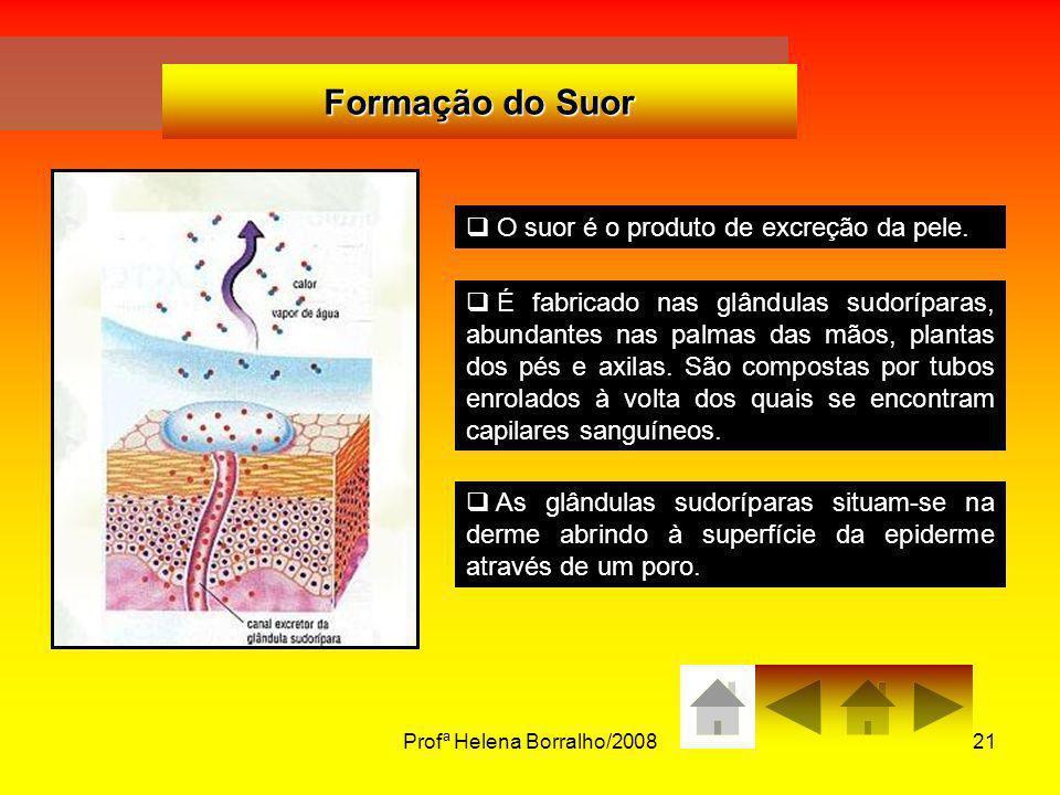 Profª Helena Borralho/200821 Formação do Suor O suor é o produto de excreção da pele. É fabricado nas glândulas sudoríparas, abundantes nas palmas das