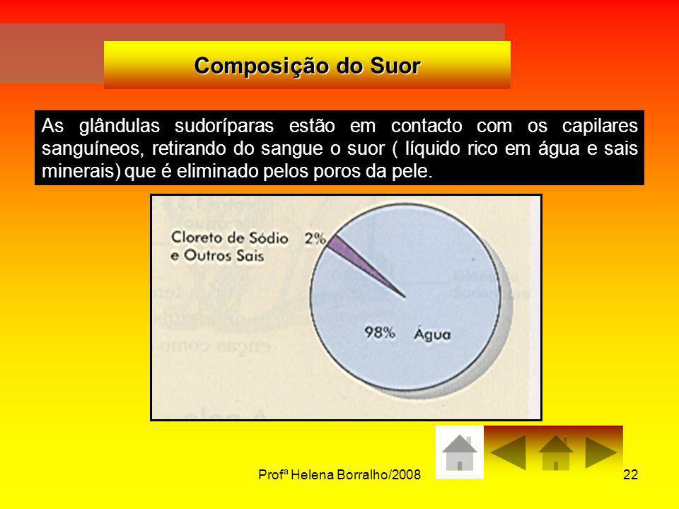Profª Helena Borralho/200822 Composição do Suor As glândulas sudoríparas estão em contacto com os capilares sanguíneos, retirando do sangue o suor ( l