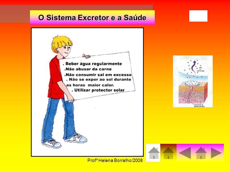 Profª Helena Borralho/200824 O Sistema Excretor e a Saúde