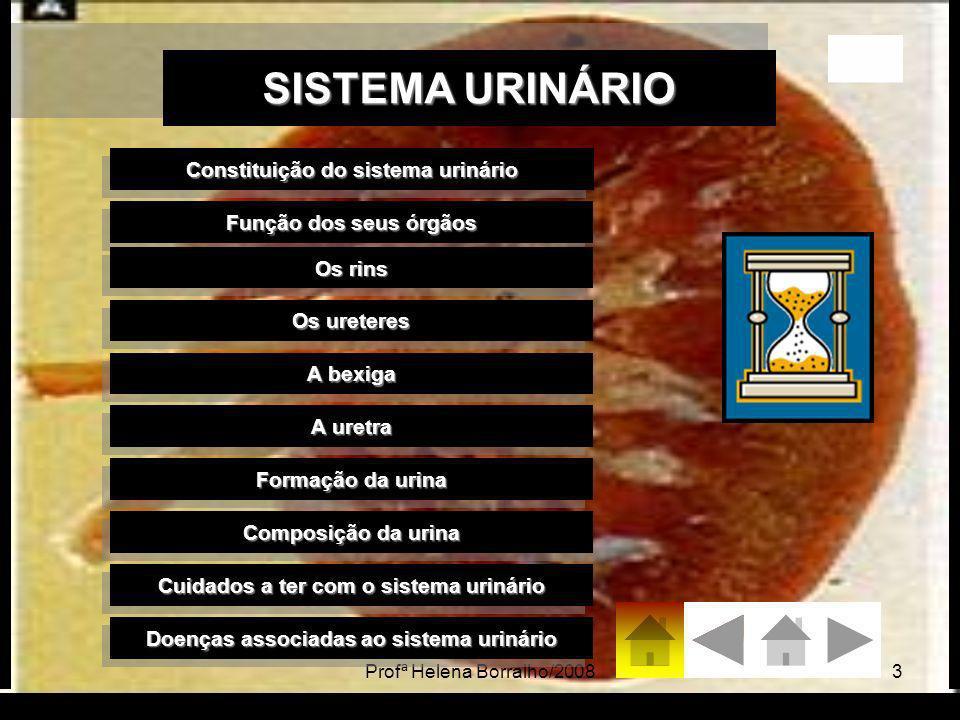 Profª Helena Borralho/200814 Cuidados a ter com o Sistema Urinário Evitar comer alimentos que contenham muito sal porque a concentração desse é regulado pelos rins.