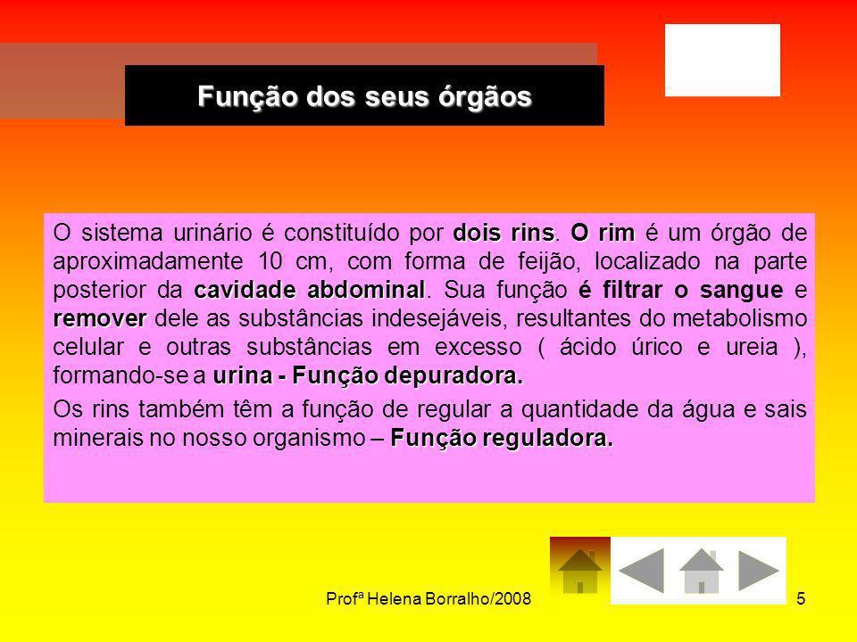 Profª Helena Borralho/20085 dois rinsO rim cavidade abdominal remover urina - Função depuradora. O sistema urinário é constituído por dois rins. O rim