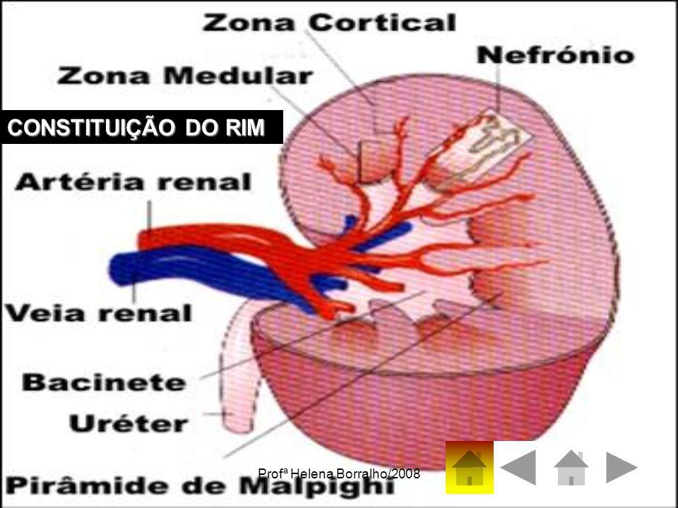 Profª Helena Borralho/20087 O sangue chega os rins através das artérias renais Sangue entra Sangue sai Ureter - canal que leva a urina até à bexiga O Córtex,contém néfrons.
