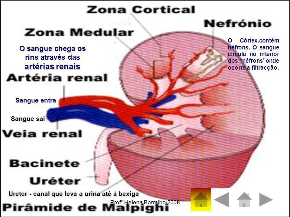 Profª Helena Borralho/20087 O sangue chega os rins através das artérias renais Sangue entra Sangue sai Ureter - canal que leva a urina até à bexiga O