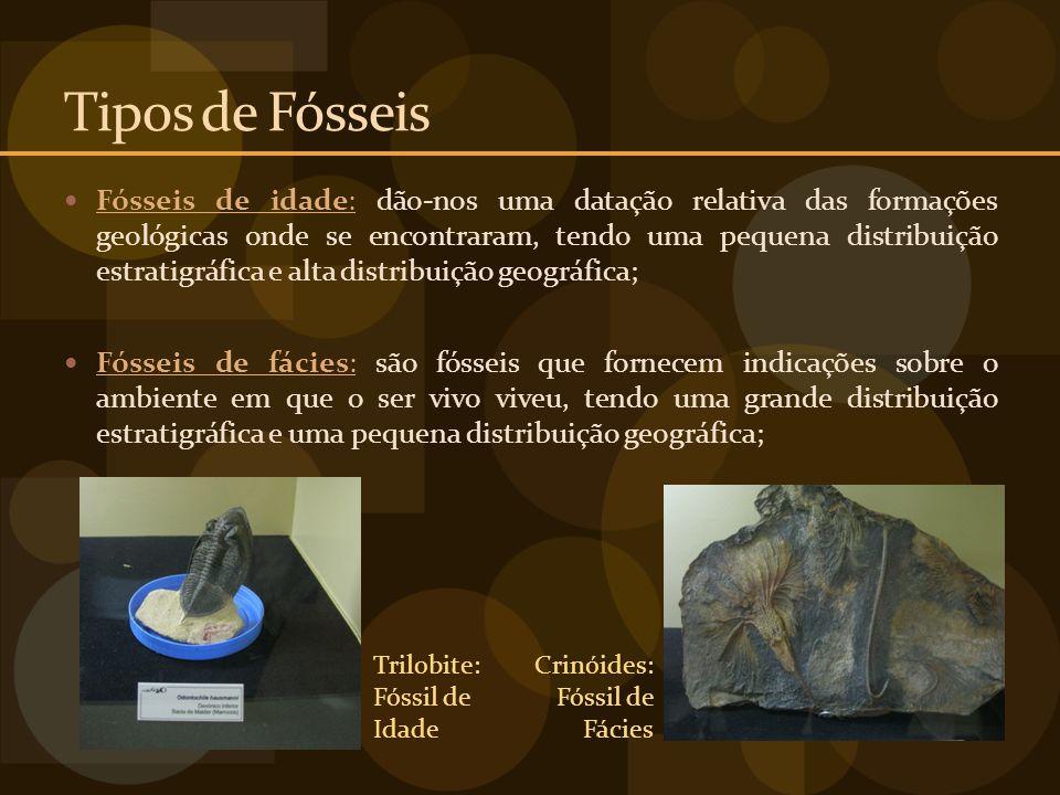 Tipos de Fósseis Fósseis de idade: dão-nos uma datação relativa das formações geológicas onde se encontraram, tendo uma pequena distribuição estratigr