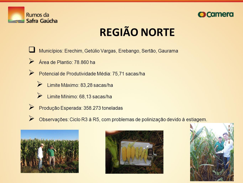 REGIÃO NORTE Municípios: Erechim, Getúlio Vargas, Erebango, Sertão, Gaurama Área de Plantio: 78.860 ha Potencial de Produtividade Média: 75,71 sacas/h