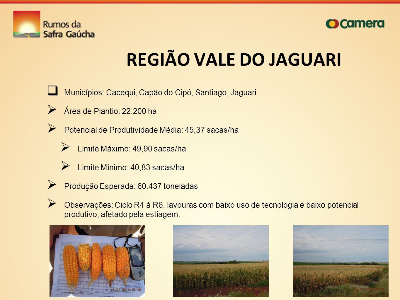 REGIÃO VALE DO JAGUARI Municípios: Cacequi, Capão do Cipó, Santiago, Jaguari Área de Plantio: 22.200 ha Potencial de Produtividade Média: 45,37 sacas/