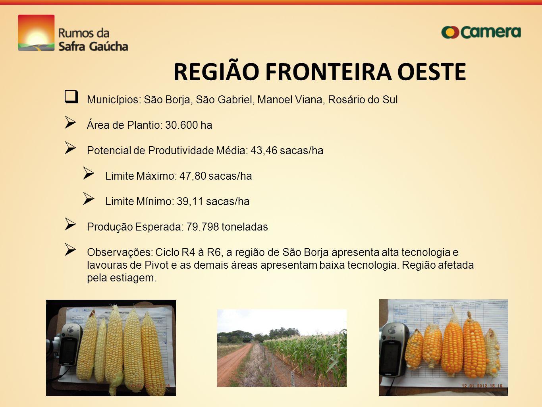 REGIÃO FRONTEIRA OESTE Municípios: São Borja, São Gabriel, Manoel Viana, Rosário do Sul Área de Plantio: 30.600 ha Potencial de Produtividade Média: 4