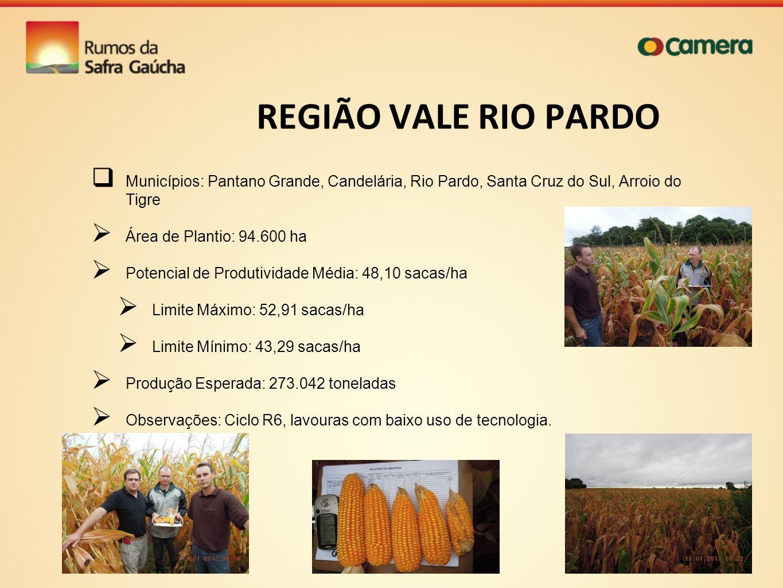 REGIÃO VALE RIO PARDO Municípios: Pantano Grande, Candelária, Rio Pardo, Santa Cruz do Sul, Arroio do Tigre Área de Plantio: 94.600 ha Potencial de Pr