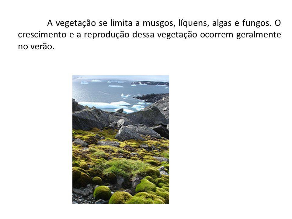 A vegetação se limita a musgos, líquens, algas e fungos. O crescimento e a reprodução dessa vegetação ocorrem geralmente no verão.