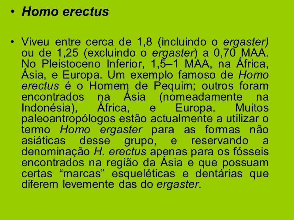 Homo erectus Viveu entre cerca de 1,8 (incluindo o ergaster) ou de 1,25 (excluindo o ergaster) a 0,70 MAA. No Pleistoceno Inferior, 1,5–1 MAA, na Áfri