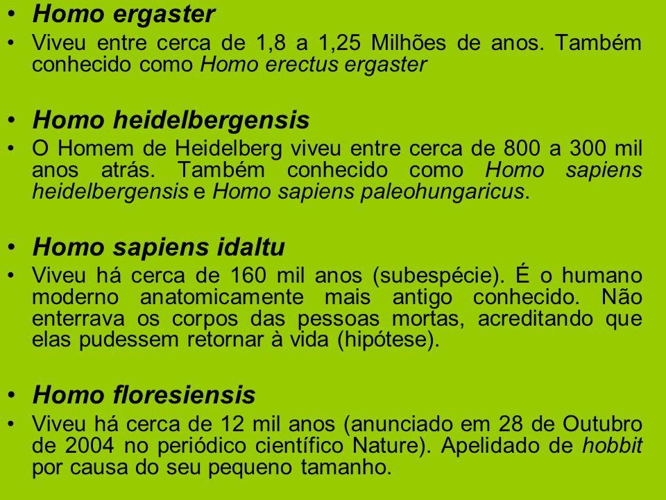 Homo ergaster Viveu entre cerca de 1,8 a 1,25 Milhões de anos. Também conhecido como Homo erectus ergaster Homo heidelbergensis O Homem de Heidelberg