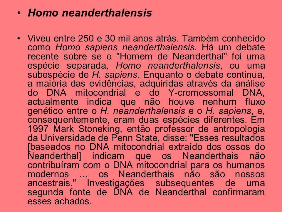 Homo neanderthalensis Viveu entre 250 e 30 mil anos atrás. Também conhecido como Homo sapiens neanderthalensis. Há um debate recente sobre se o