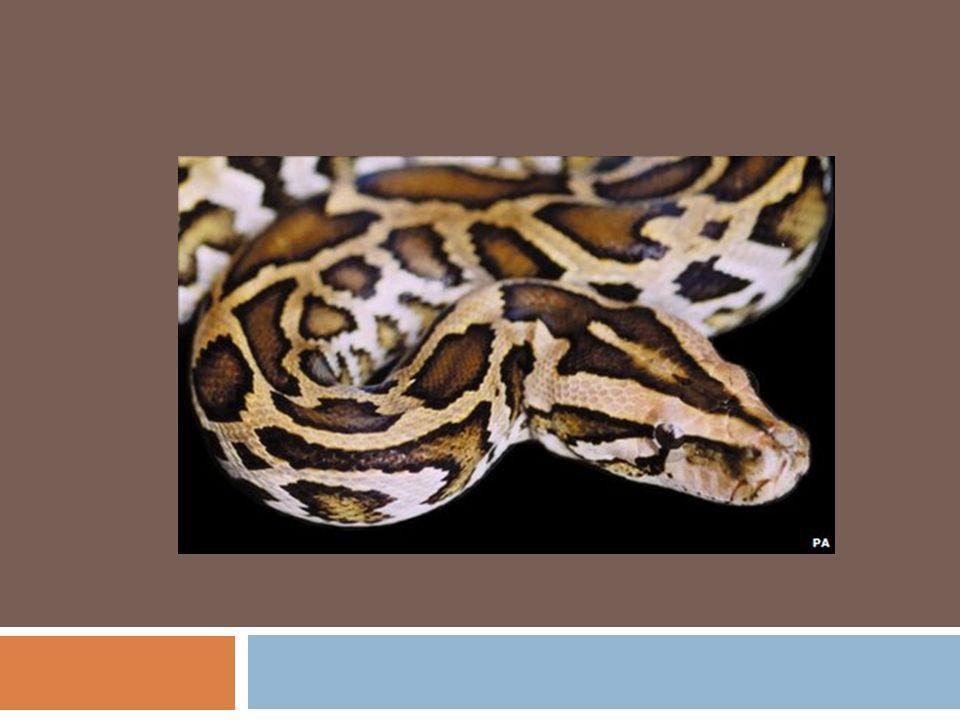O habitat das serpentes são os bosques, nos lugares pedregosos revestidos de silvas, onde podem facilmente encontrar abrigos, já que não suportam uma exposição prolongada ao sol.