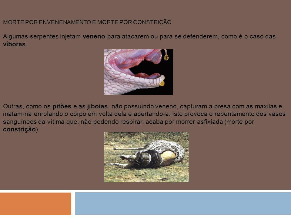 MORTE POR ENVENENAMENTO E MORTE POR CONSTRIÇÃO Algumas serpentes injetam veneno para atacarem ou para se defenderem, como é o caso das víboras. Outras