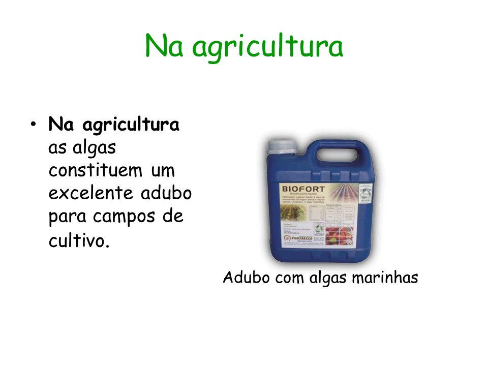 Na agricultura Na agricultura as algas constituem um excelente adubo para campos de cultivo. Adubo com algas marinhas