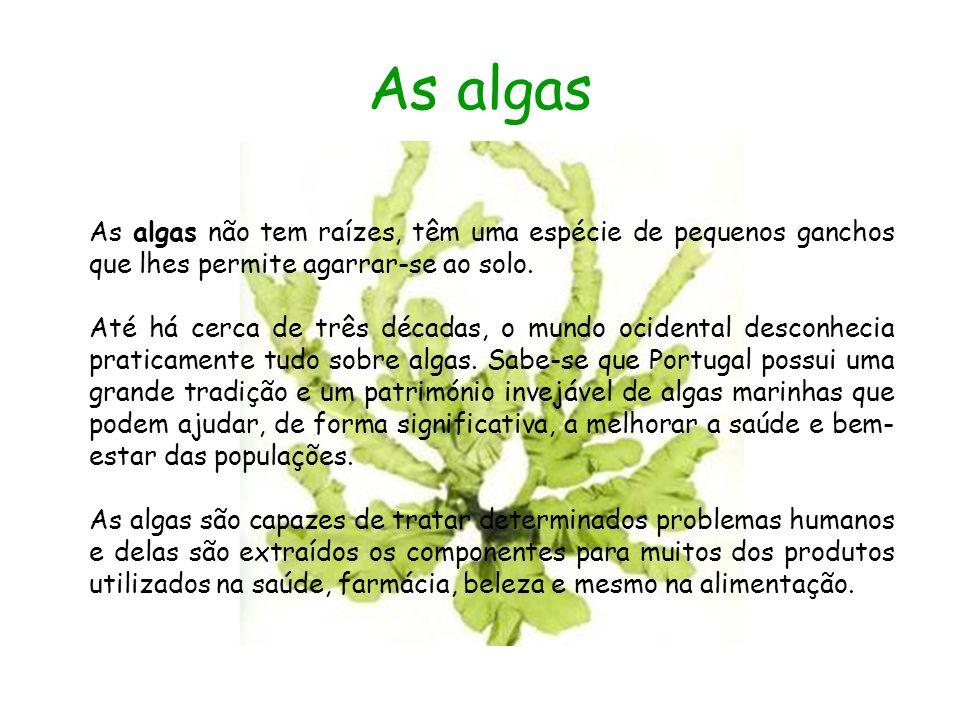 As algas As algas não tem raízes, têm uma espécie de pequenos ganchos que lhes permite agarrar-se ao solo. Até há cerca de três décadas, o mundo ocide