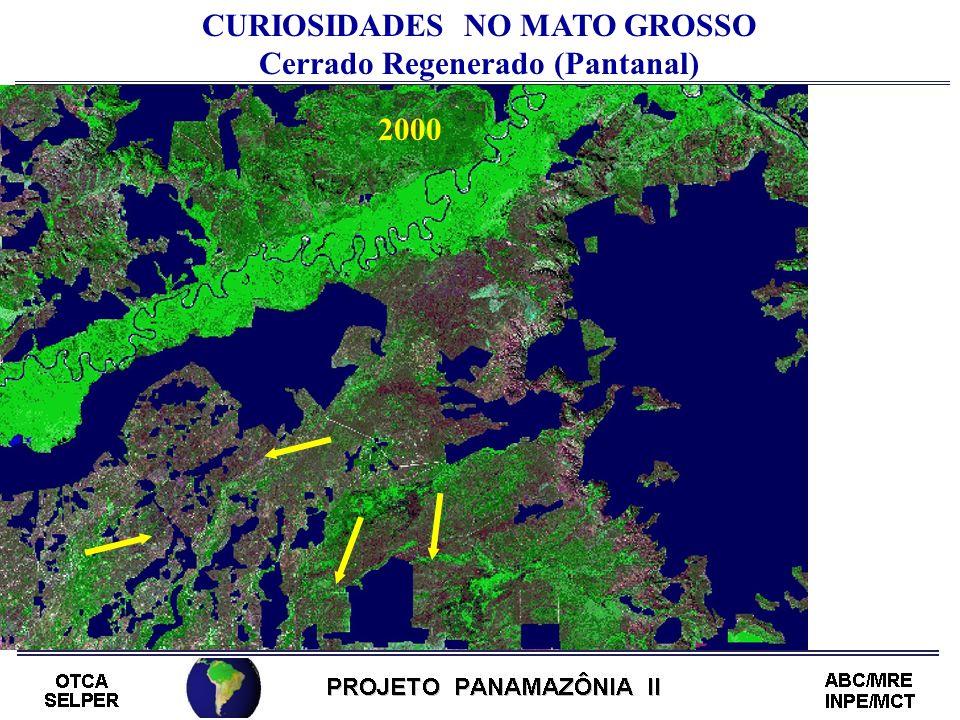 CURIOSIDADES NO MATO GROSSO Cerrado Regenerado (Pantanal) 2000