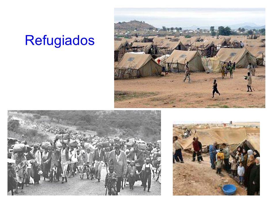 14 Refugiados