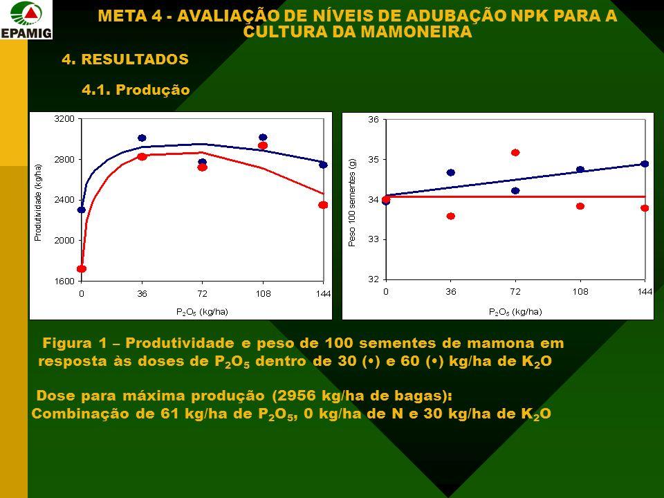 4. RESULTADOS 4.1. Produção Figura 1 – Produtividade e peso de 100 sementes de mamona em resposta às doses de P 2 O 5 dentro de 30 () e 60 () kg/ha de