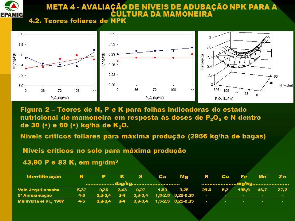 Figura 2 – Teores de N, P e K para folhas indicadoras do estado nutricional de mamoneira em resposta às doses de P 2 O 5 e N dentro de 30 () e 60 () kg/ha de K 2 O.