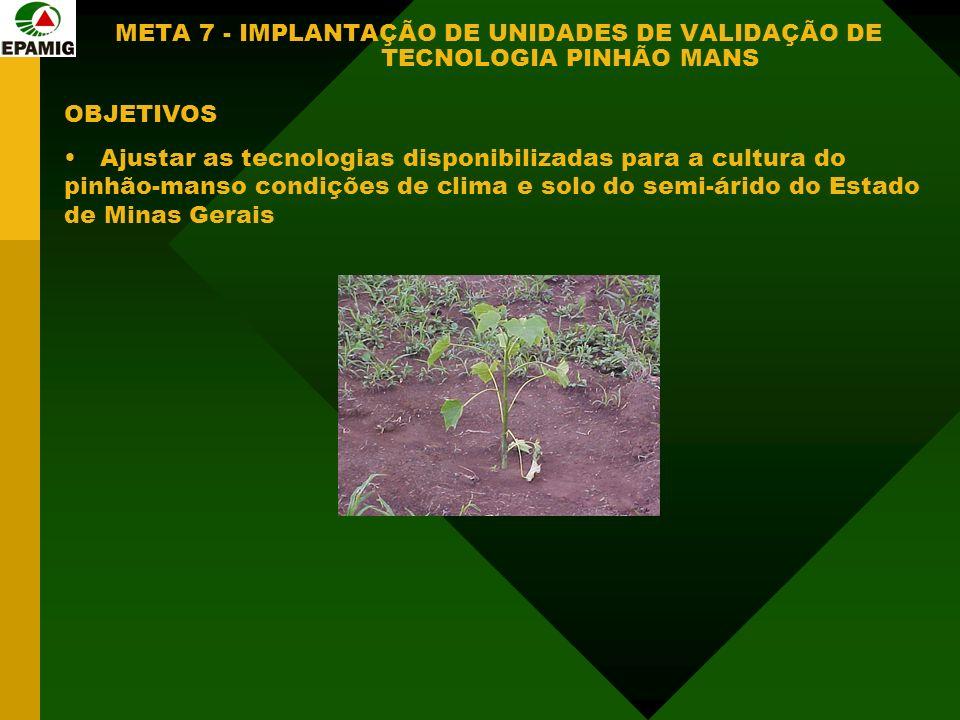 META 7 - IMPLANTAÇÃO DE UNIDADES DE VALIDAÇÃO DE TECNOLOGIA PINHÃO MANS OBJETIVOS Ajustar as tecnologias disponibilizadas para a cultura do pinhão-manso condições de clima e solo do semi-árido do Estado de Minas Gerais