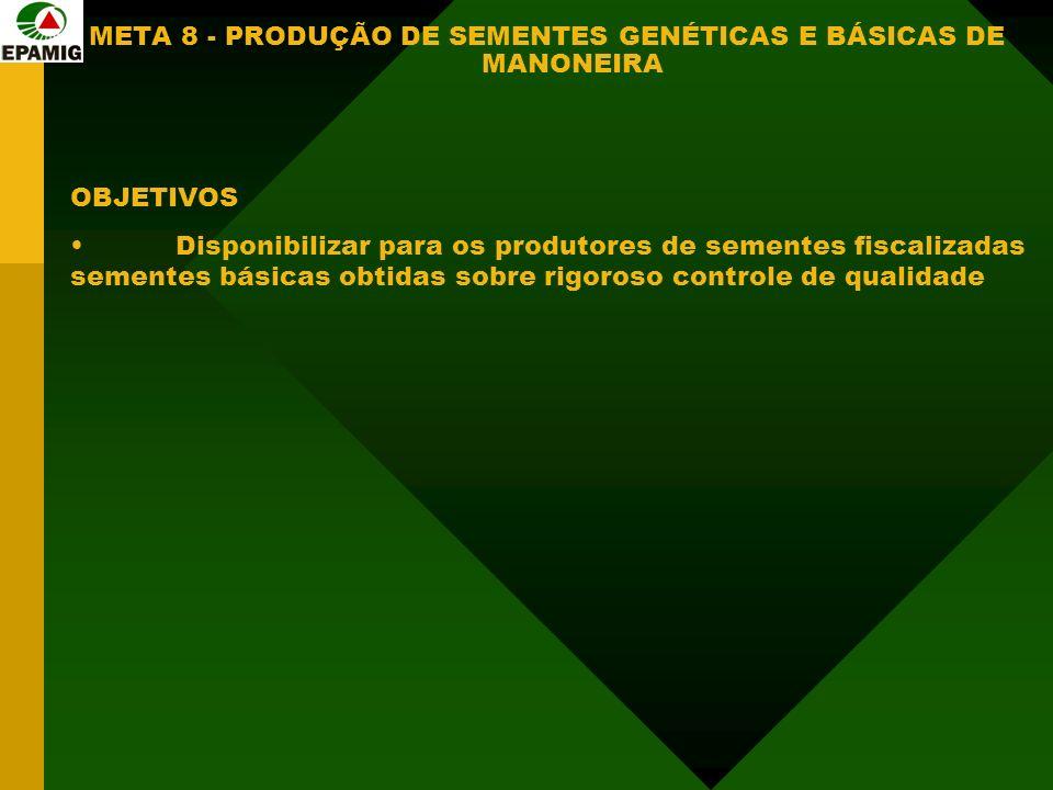 META 8 - PRODUÇÃO DE SEMENTES GENÉTICAS E BÁSICAS DE MANONEIRA OBJETIVOS Disponibilizar para os produtores de sementes fiscalizadas sementes básicas obtidas sobre rigoroso controle de qualidade