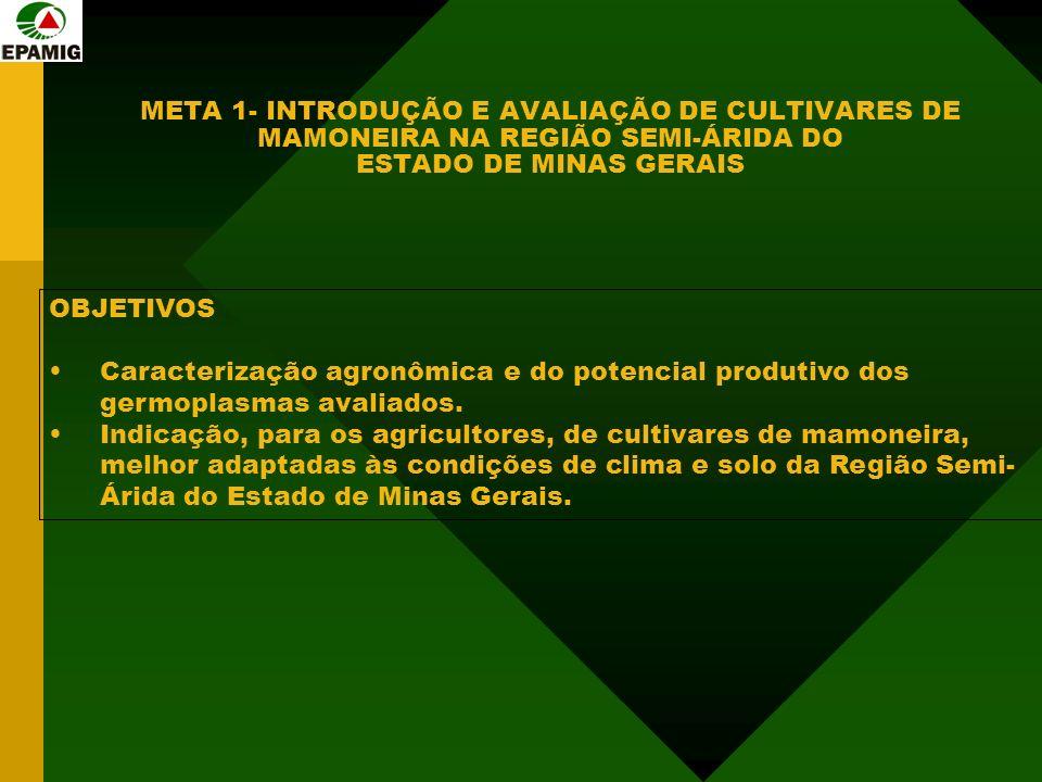 META 1- INTRODUÇÃO E AVALIAÇÃO DE CULTIVARES DE MAMONEIRA NA REGIÃO SEMI-ÁRIDA DO ESTADO DE MINAS GERAIS OBJETIVOS Caracterização agronômica e do potencial produtivo dos germoplasmas avaliados.