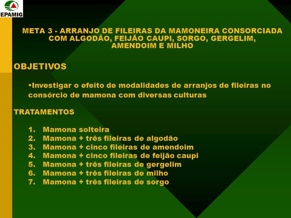 META 3 - ARRANJO DE FILEIRAS DA MAMONEIRA CONSORCIADA COM ALGODÃO, FEIJÃO CAUPI, SORGO, GERGELIM, AMENDOIM E MILHO OBJETIVOS Investigar o efeito de modalidades de arranjos de fileiras no consórcio de mamona com diversas culturas TRATAMENTOS 1.Mamona solteira 2.Mamona + três fileiras de algodão 3.Mamona + cinco fileiras de amendoim 4.Mamona + cinco fileiras de feijão caupi 5.Mamona + três fileiras de gergelim 6.Mamona + três fileiras de milho 7.Mamona + três fileiras de sorgo