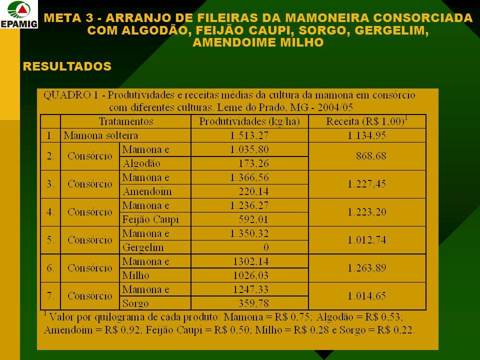 META 3 - ARRANJO DE FILEIRAS DA MAMONEIRA CONSORCIADA COM ALGODÃO, FEIJÃO CAUPI, SORGO, GERGELIM, AMENDOIME MILHO RESULTADOS
