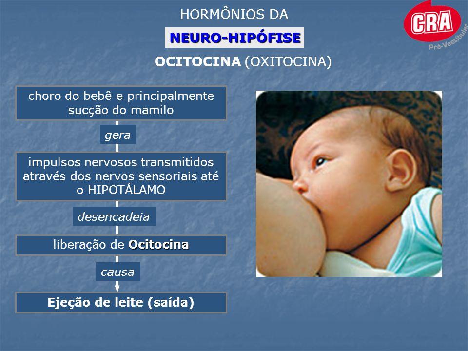 NEURO-HIPÓFISE HORMÔNIOS DA OCITOCINA (OXITOCINA) choro do bebê e principalmente sucção do mamilo impulsos nervosos transmitidos através dos nervos sensoriais até o HIPOTÁLAMO Ocitocina liberação de Ocitocina desencadeia causa Ejeção de leite (saída) gera