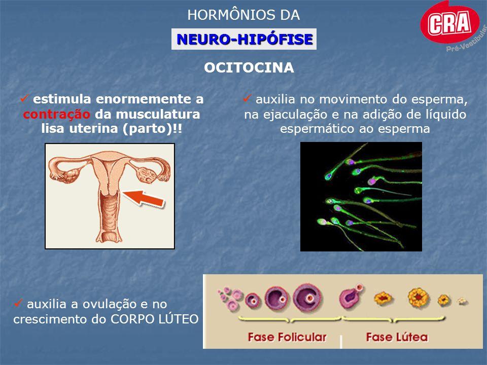 NEURO-HIPÓFISE HORMÔNIOS DA OCITOCINA estimula enormemente a contração da musculatura lisa uterina (parto)!.