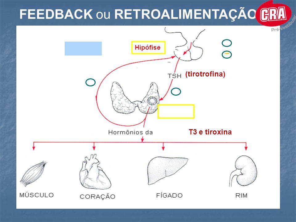 Hipófise FEEDBACK ou RETROALIMENTAÇÃO Hipófise + _ (tirotrofina) Tireóide (T3 e tiroxina) Tireóide + ESTÍMULO INIBIÇÃO _