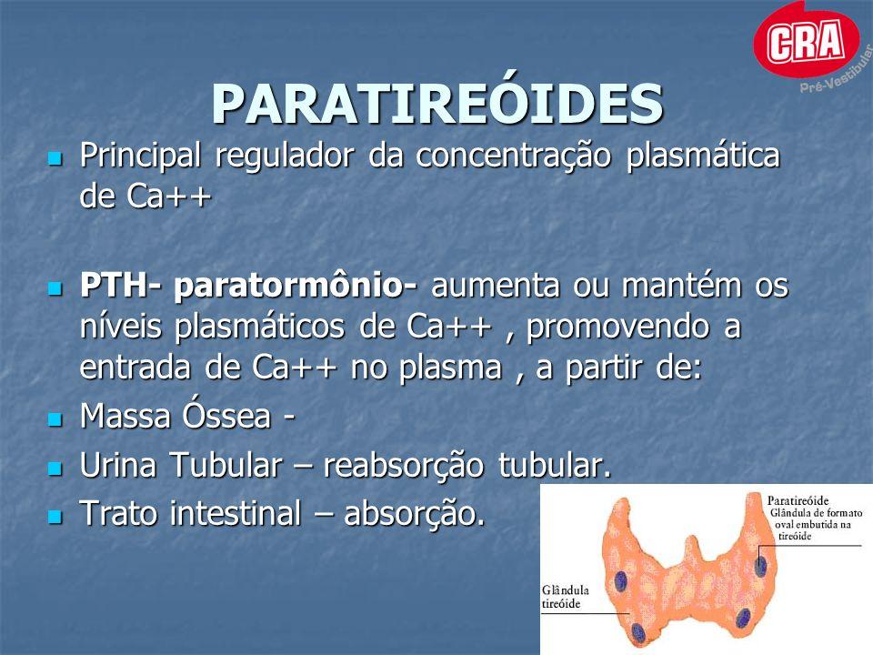 PARATIREÓIDES Principal regulador da concentração plasmática de Ca++ Principal regulador da concentração plasmática de Ca++ PTH- paratormônio- aumenta ou mantém os níveis plasmáticos de Ca++, promovendo a entrada de Ca++ no plasma, a partir de: PTH- paratormônio- aumenta ou mantém os níveis plasmáticos de Ca++, promovendo a entrada de Ca++ no plasma, a partir de: Massa Óssea - Massa Óssea - Urina Tubular – reabsorção tubular.