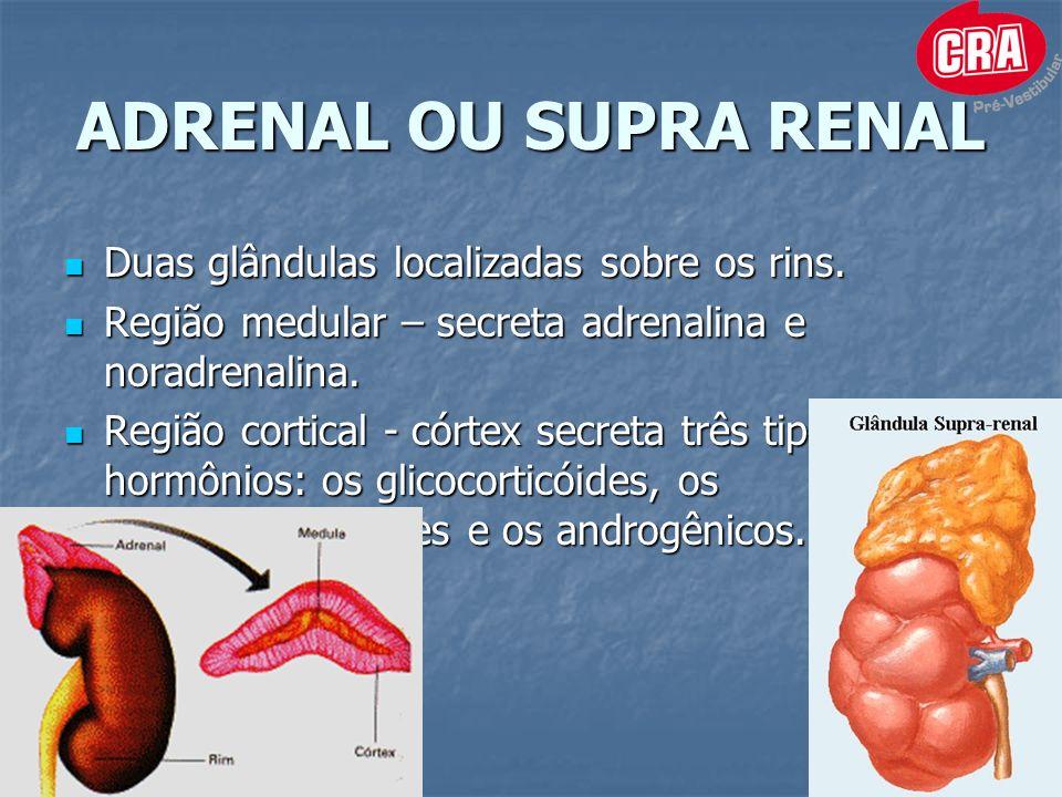ADRENAL OU SUPRA RENAL Duas glândulas localizadas sobre os rins.