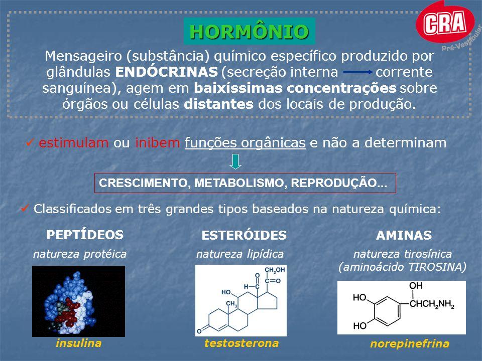 GLÂNDULAS conjunto de células capazes de produzir, armazenar e secretar substâncias PINEAL HIPOTÁLAMO HIPÓFISE TIREÓIDE TIMO PARATIREÓIDE OVÁRIOS TESTÍCULOS PÂNCREAS SUPRA-RENAIS