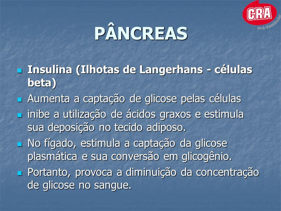 PÂNCREAS Insulina (Ilhotas de Langerhans - células beta) Insulina (Ilhotas de Langerhans - células beta) Aumenta a captação de glicose pelas células Aumenta a captação de glicose pelas células inibe a utilização de ácidos graxos e estimula sua deposição no tecido adiposo.