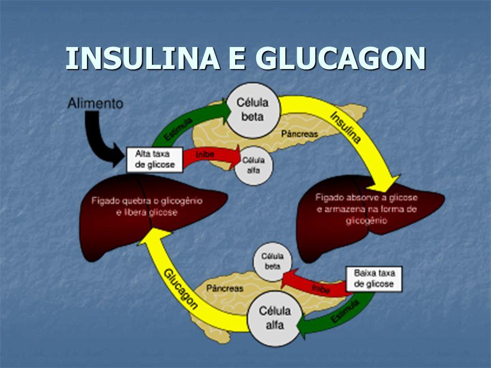 INSULINA E GLUCAGON