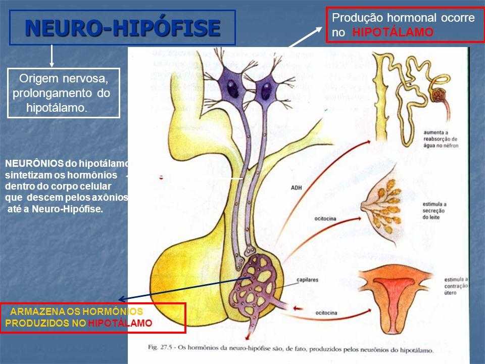 NEURO-HIPÓFISE (HIPOTALÂMICOS) HORMÔNIOS DA HORMÔNIO ANTI-DIURÉTICO ou VASOPRESSINA (ADH) ADH aumenta a permeabilidade dos DUCTOS COLETORES de água no rim Aumenta a reabsorção de água DUCTOS COLETORES Diminui o volume de urina concentrações pode causar DIABETE INSÍPIDA Sede excessiva e intensa poliúria * ÁLCOOL INIBE A PRODUÇÃO DE ADH