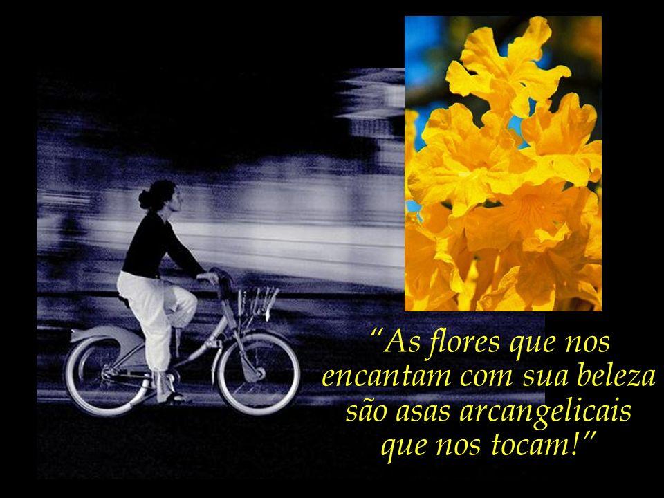 ...nos vem o querido poeta Roberto Crema, e, ao apontar para a floração do ipê amarelo, nos recorda:...