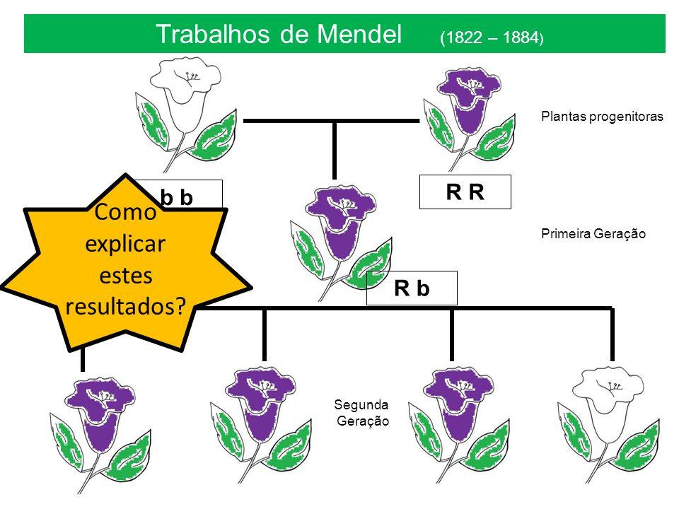 Trabalhos de Mendel (1822 – 1884 ) Plantas progenitoras Primeira Geração Segunda Geração R b R b Como explicar estes resultados?