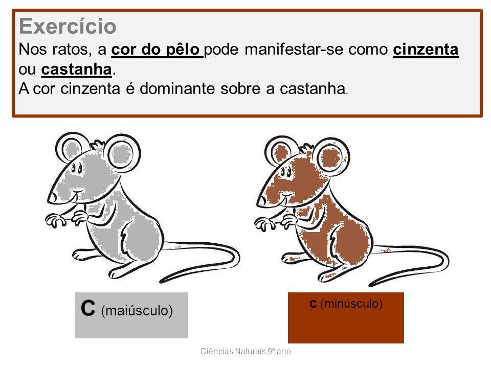 Ciências Naturais 9º ano Exercício Nos ratos, a cor do pêlo pode manifestar-se como cinzenta ou castanha. A cor cinzenta é dominante sobre a castanha.