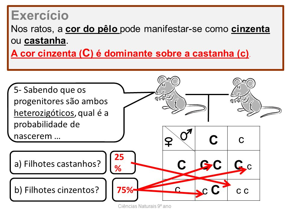 Ciências Naturais 9º ano Exercício Nos ratos, a cor do pêlo pode manifestar-se como cinzenta ou castanha. A cor cinzenta ( C ) é dominante sobre a cas