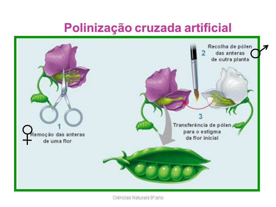 Ciências Naturais 9º ano Polinização cruzada artificial